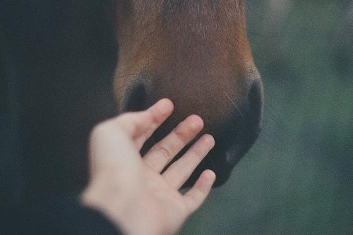 Kurse für Menschen und Pferde Gesundheit - Ausbildung - Abwechslung